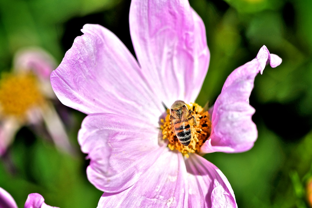 I don´t like this cold weather :-( Wish you would Bee here!!!