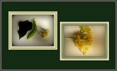 I fiori del profumatissimo tiglio...