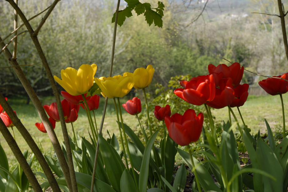 I fiori di Sciolze