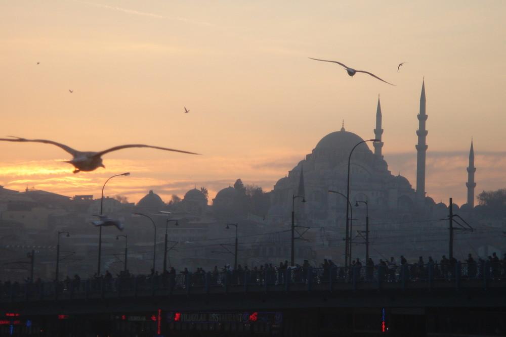 I Gabbiani vanno a nanna nell'ORO del Corno d'Istanbul