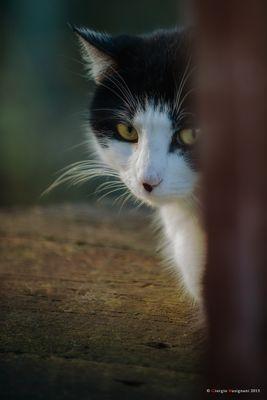 I gatti del gattile # 2