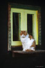 I gatti del gattile # 3