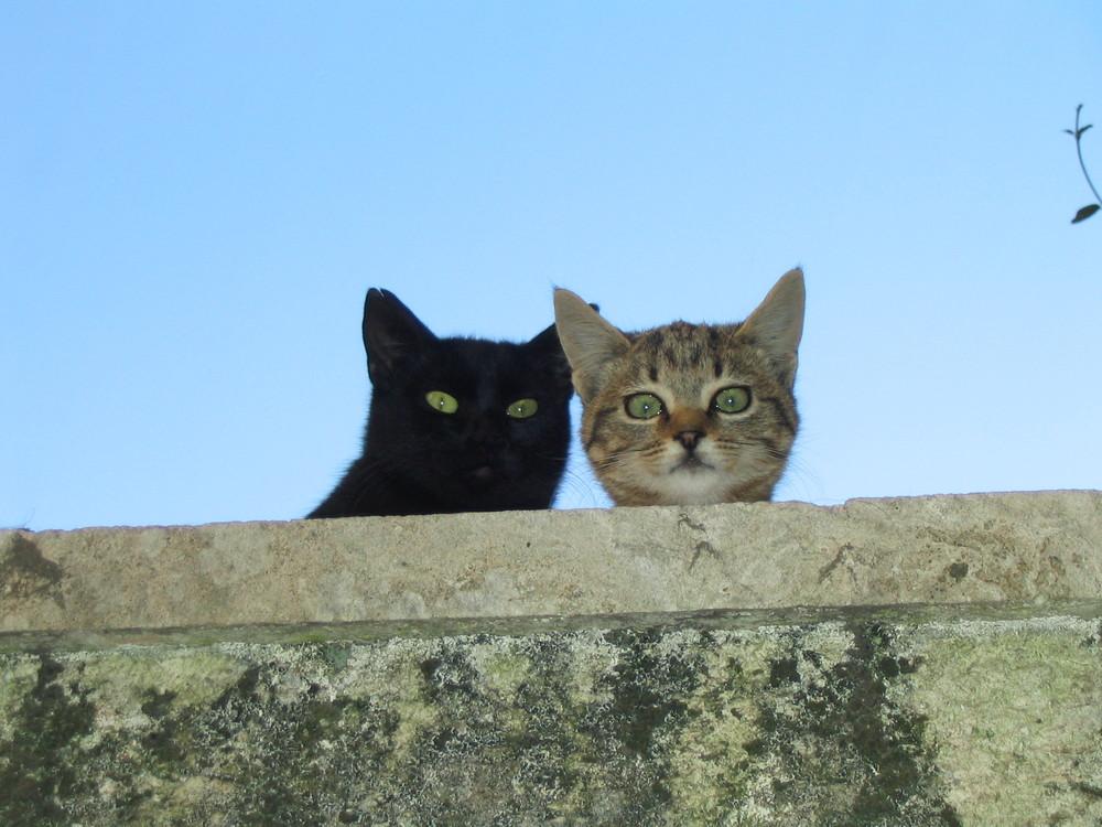 i gatti del muretto