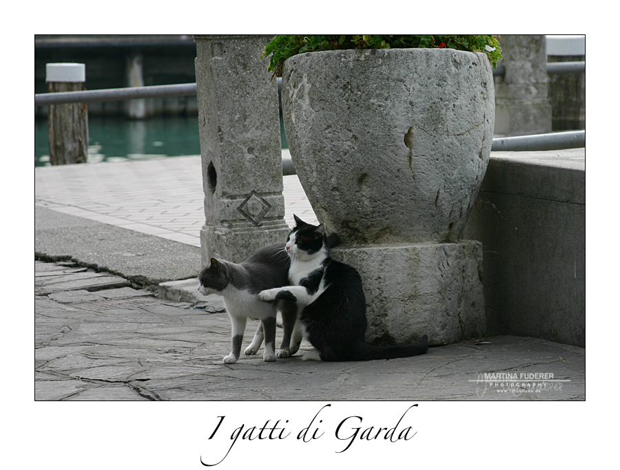I gatti di Garda III
