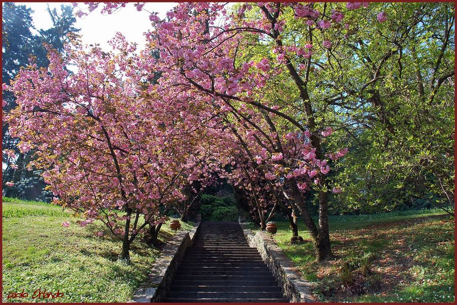 I giardini di marzo si vestono di nuovi colori for I giardini di marzo