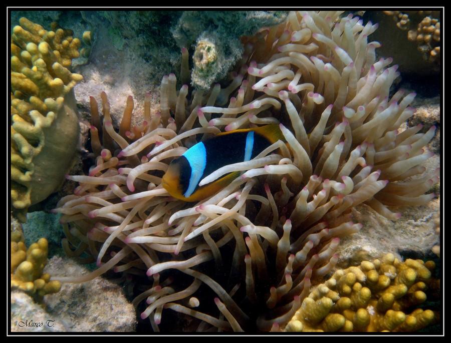 I have found Nemo
