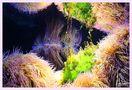 I ) Korallenspiegel von Heidi..H.