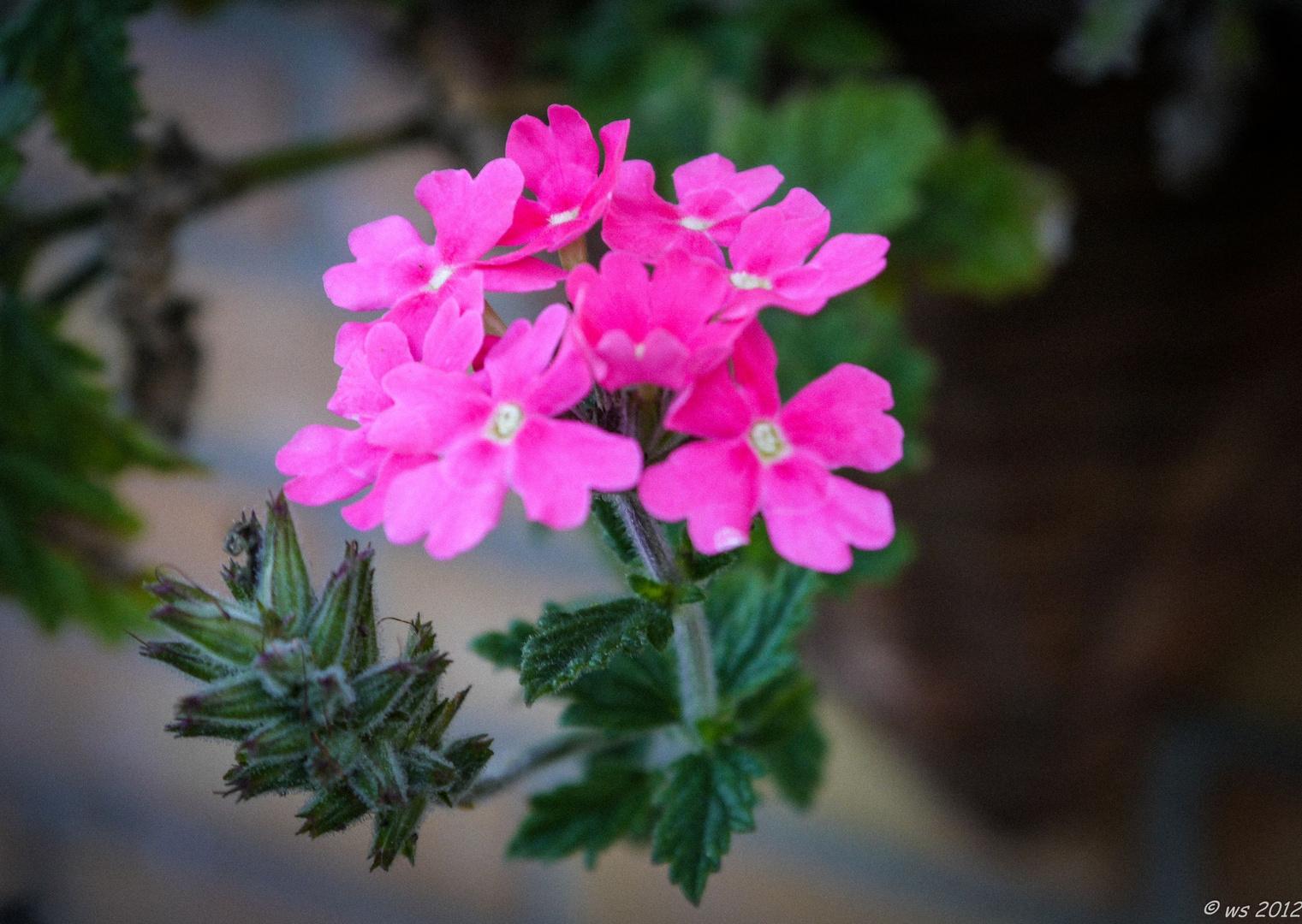 I like pink...