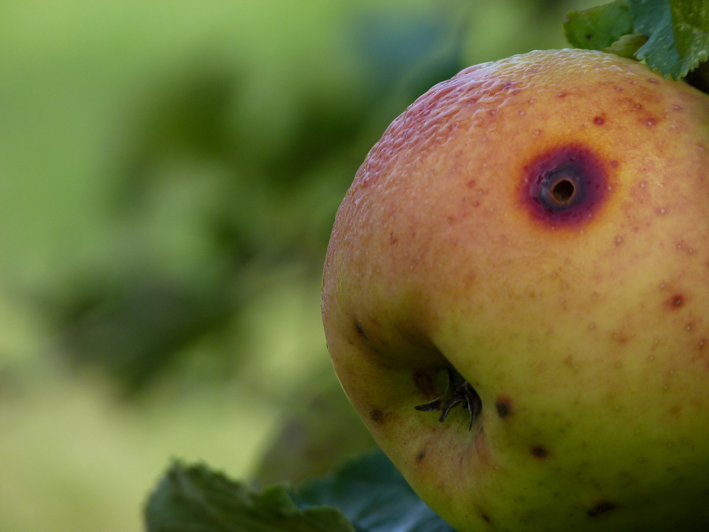 I love Apple!