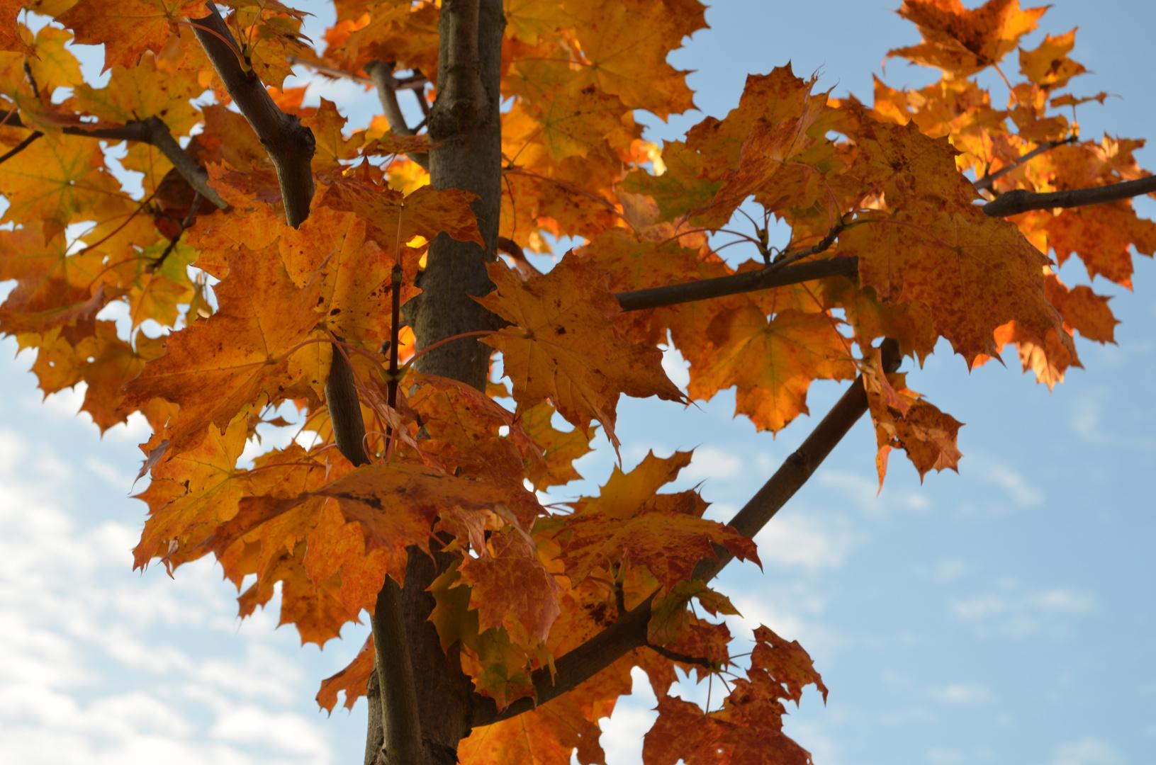 I love Herbst