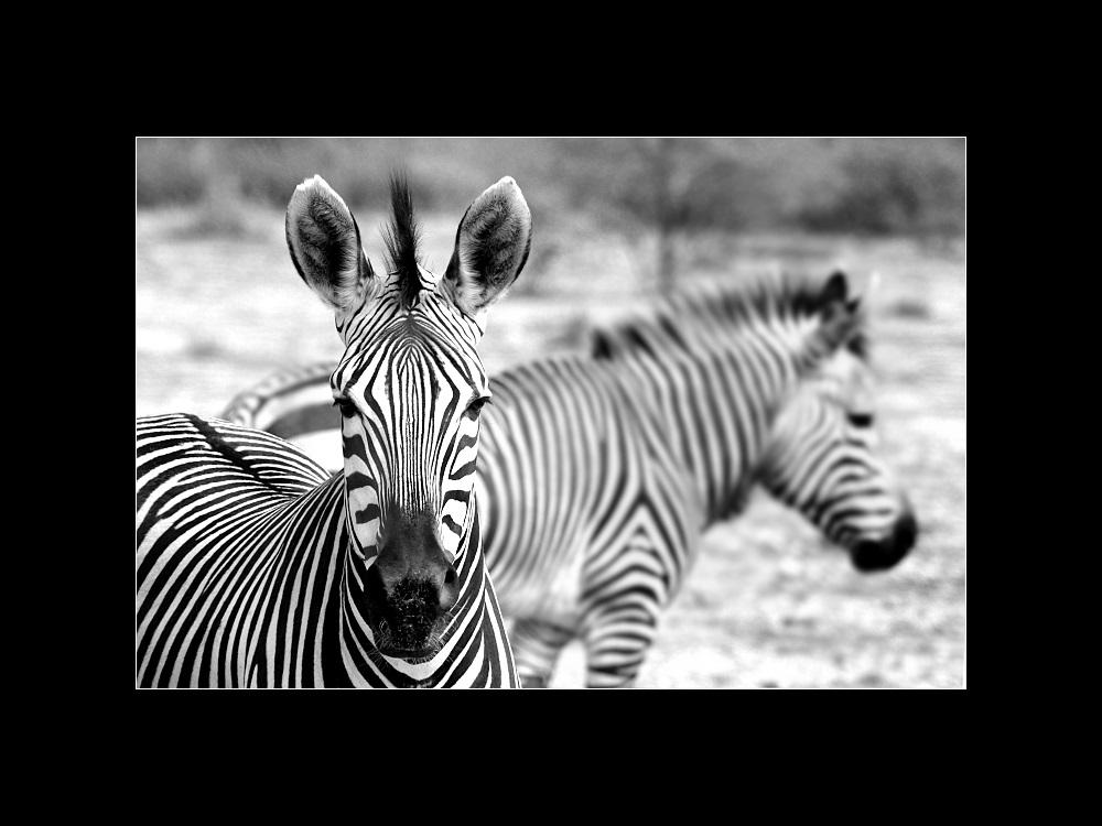 I love Namibia (II)