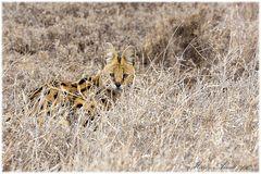 I love Serengeti