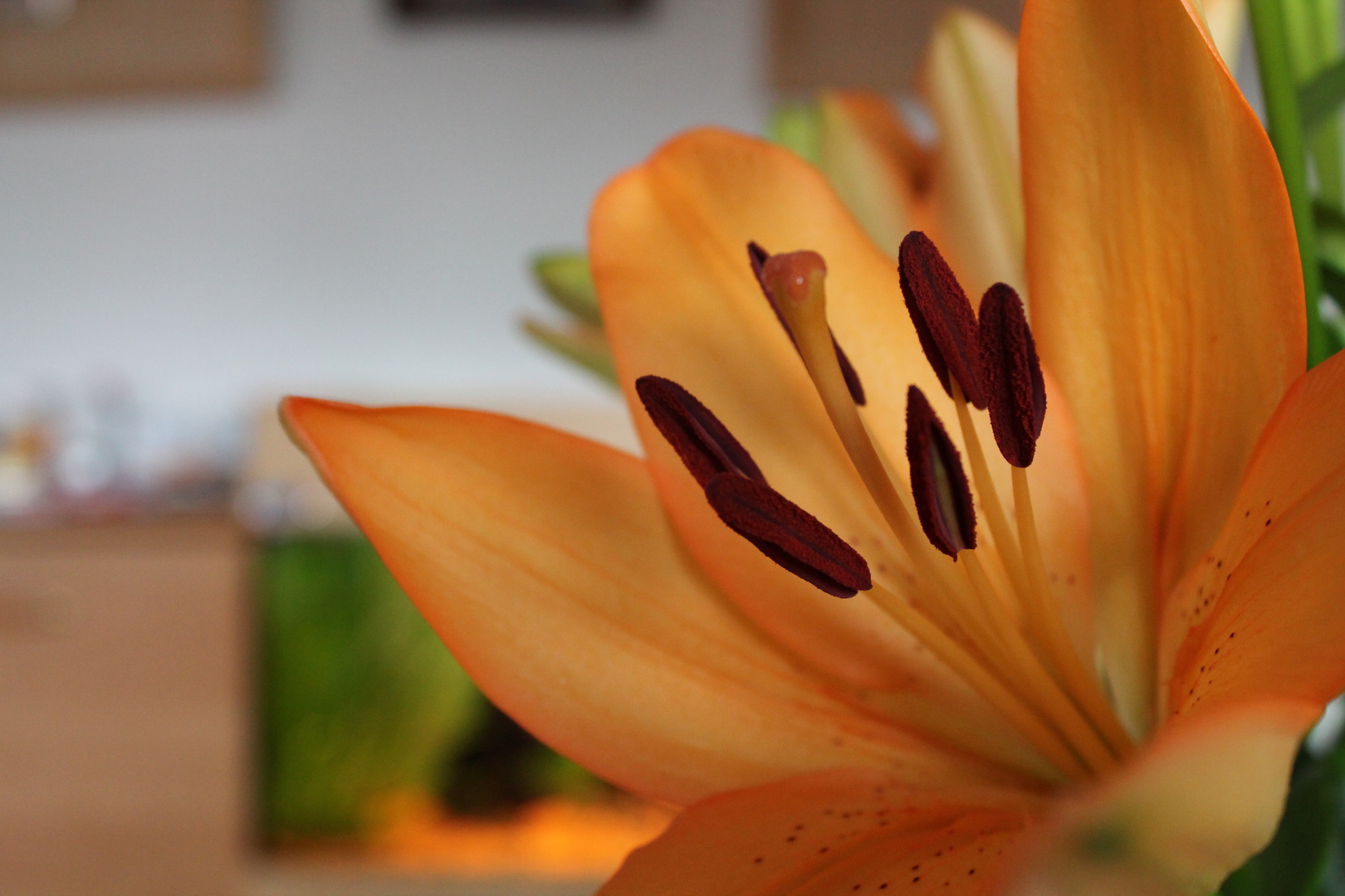 I Love this Flower