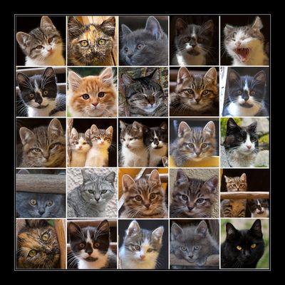 I miei AMICI gatti........