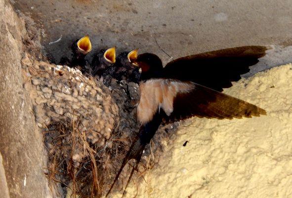 I piccoli hanno fame !