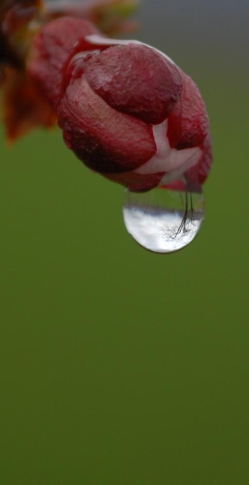 I riflessi della pioggia