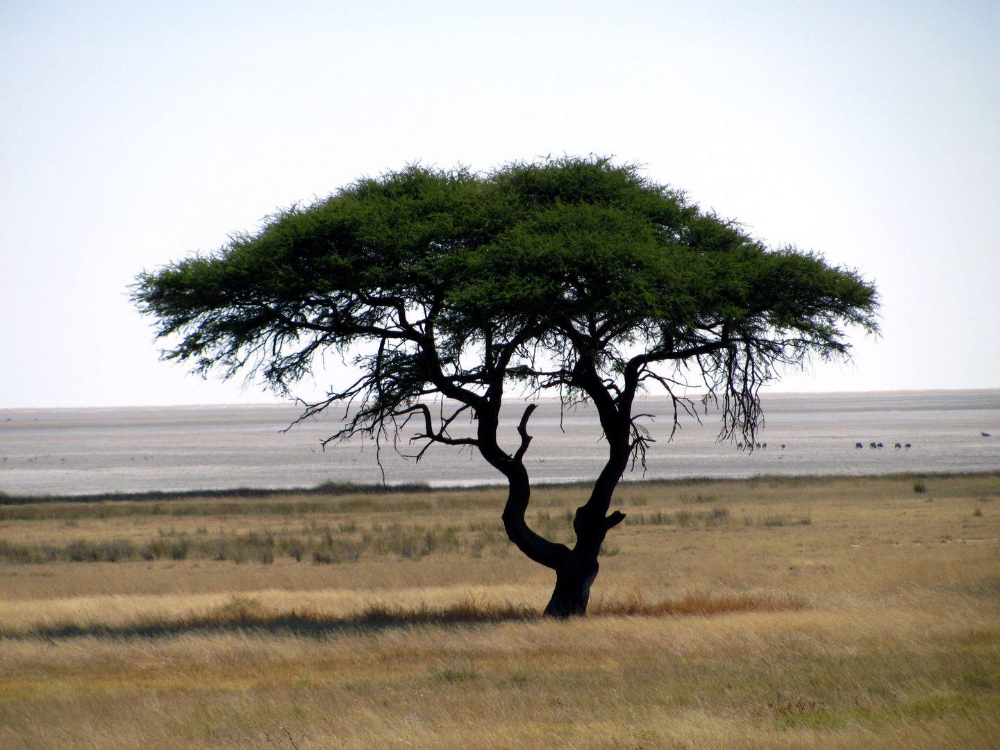 I think of africa.........