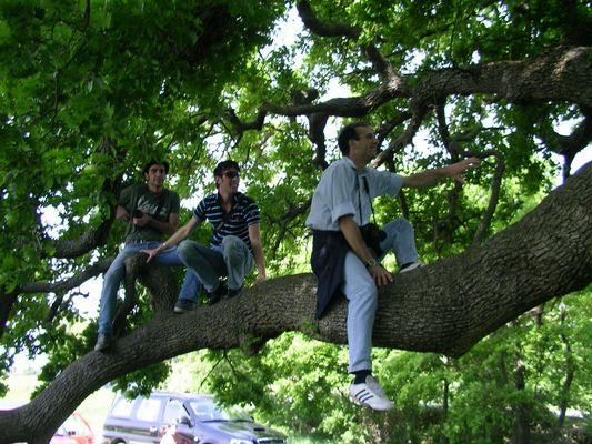 I tre sulla quercia