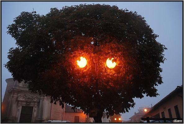 I vigil- alberi