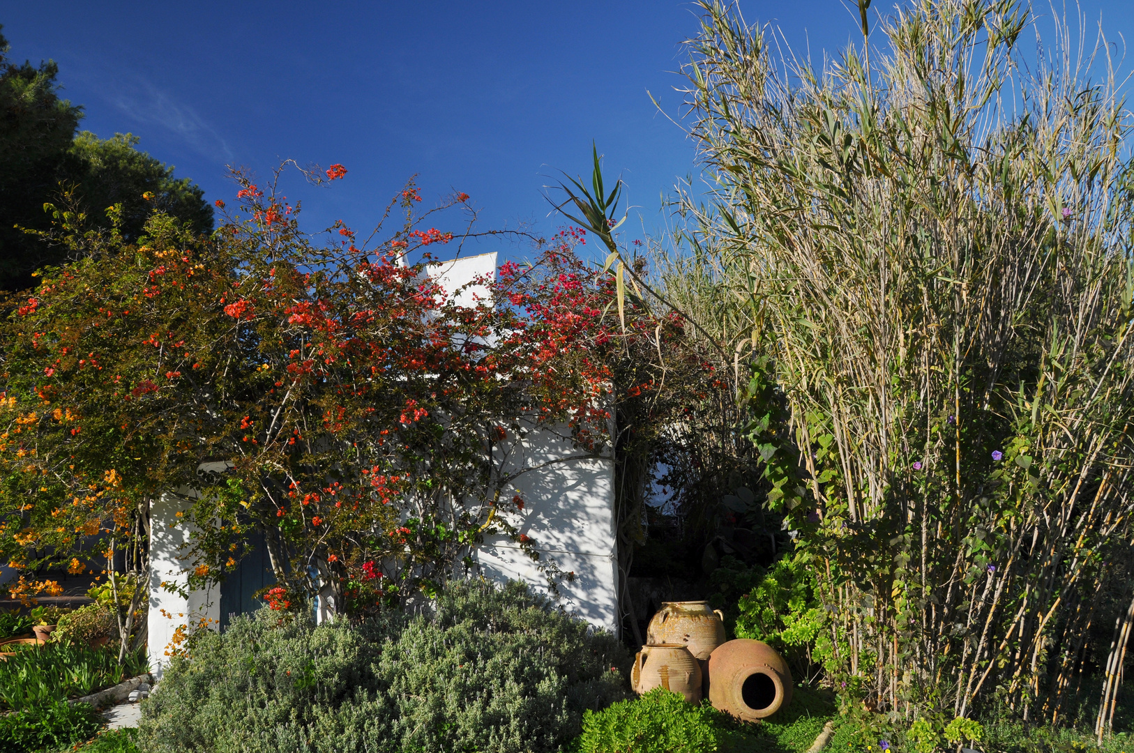 Ibiza: Finca rustica mit üppigem Vorgarten