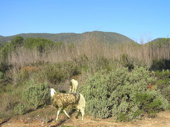Ibiza hat auch viel Natur