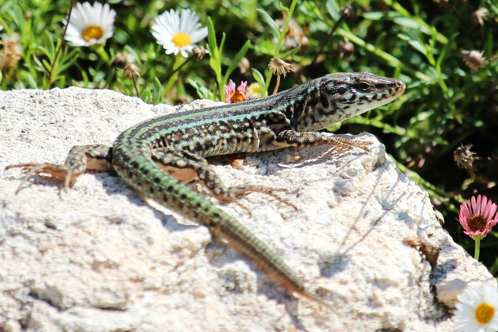 Ibiza Wildlife II