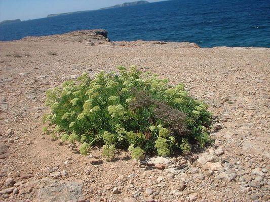 Ibizas Natur