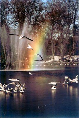 Ice, birds and rainbows