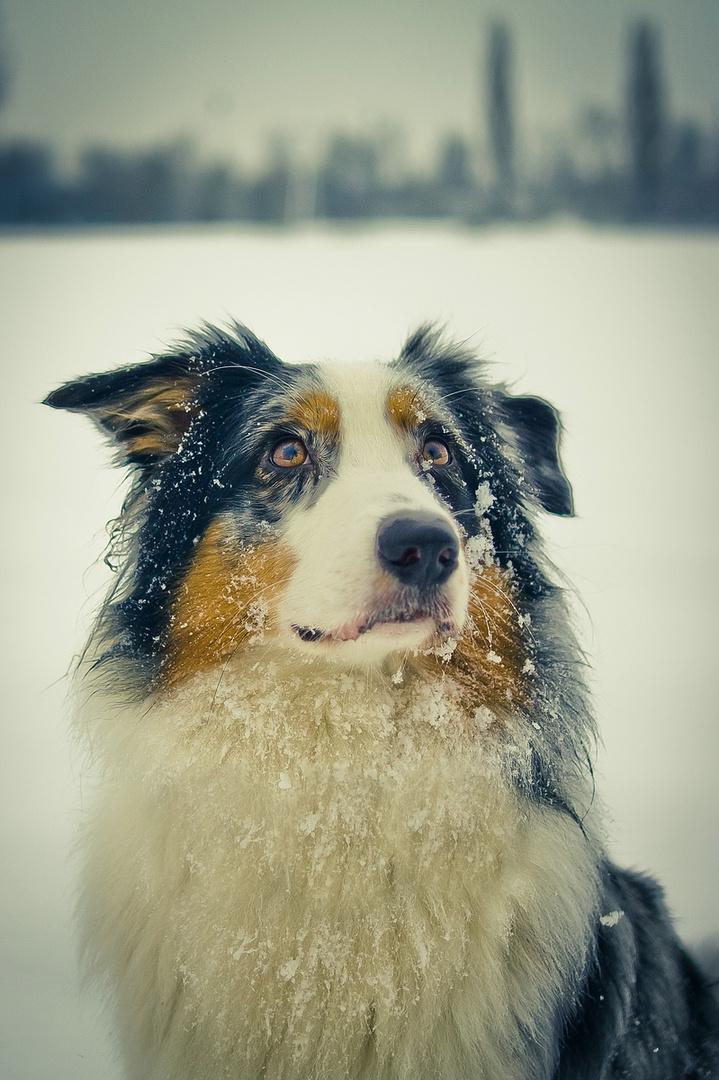 Ice-Dog