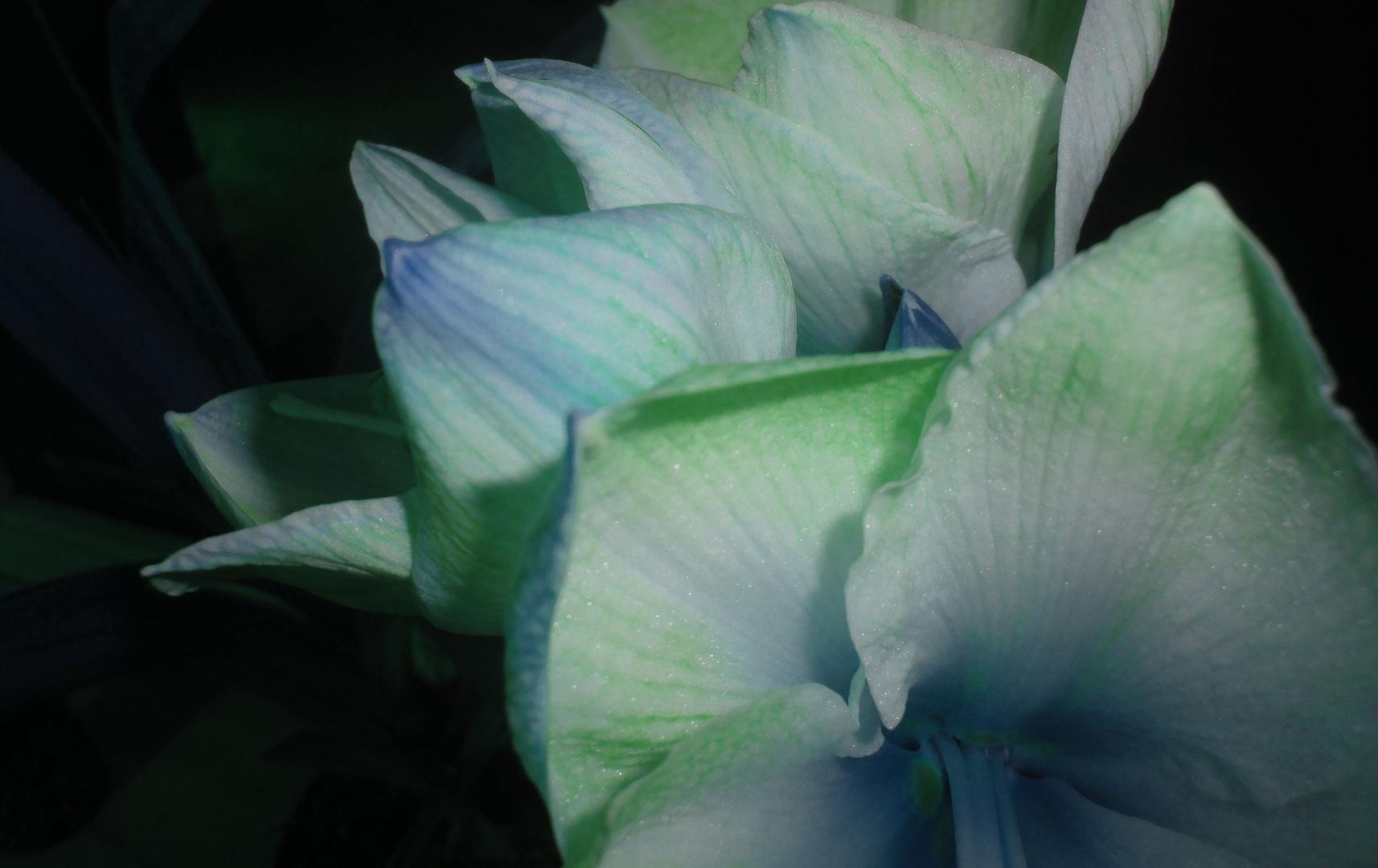 ice -flower