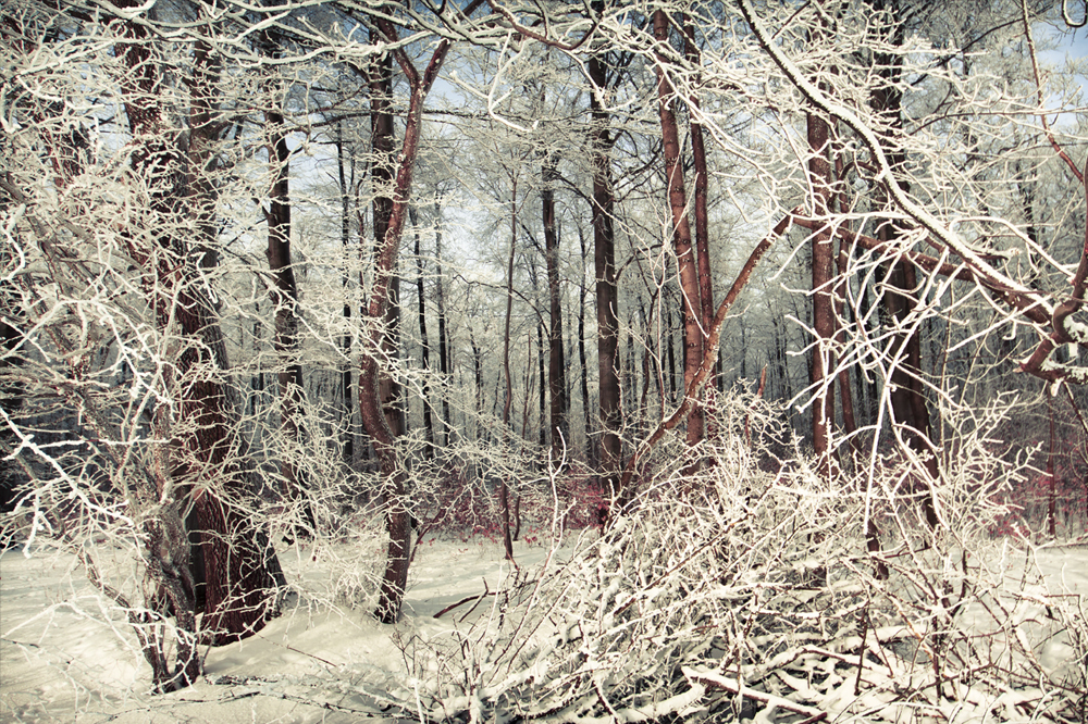 ICE FORREST