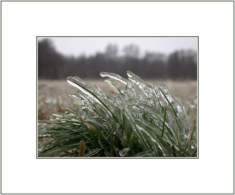 Ice - Gras...