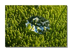 Iceland Impressions - Waterdrops on Moss