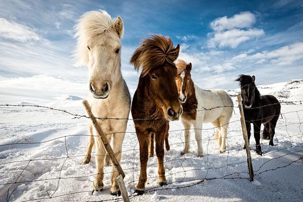 Icelandic Hairstyle
