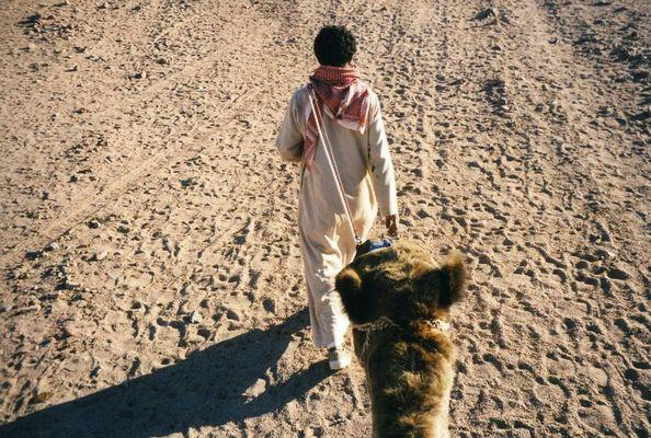 Ich ( auf ) Kamel