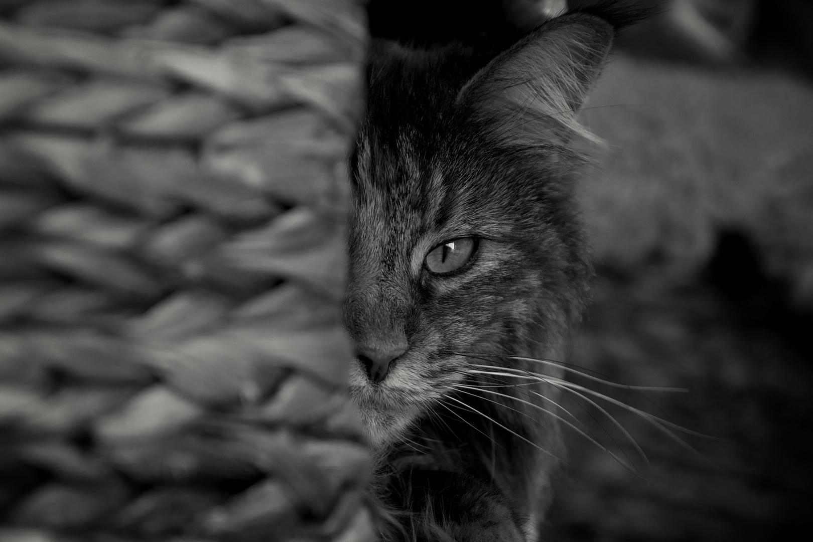 Ich beobachte dich