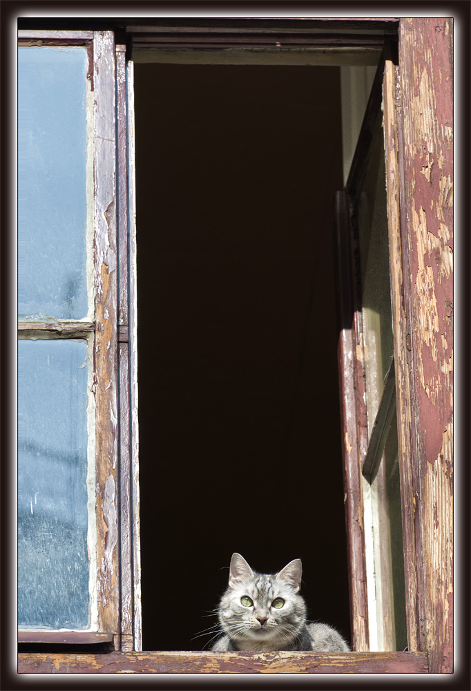 Ich beobachte dich!