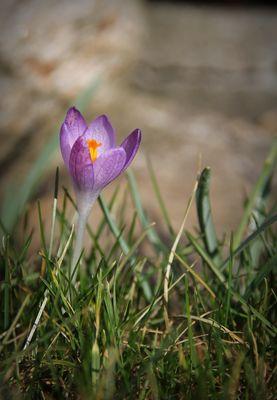 ICH BIN BEREIT! - für den Frühling