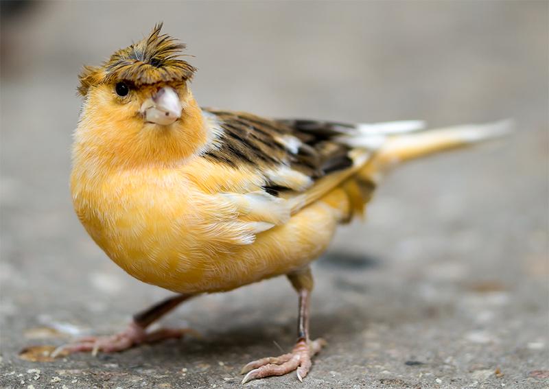 Ich bin der Partyvogel