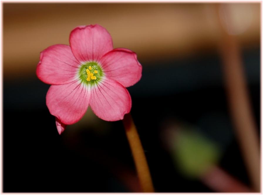 ich bin die Blüte vom Glück