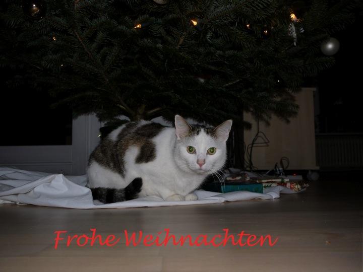 Ich bin doch wohl das schönste Geschenk unterm Tannenbaum, oder?
