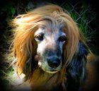 """Ich bin ein echter """"Wind-"""" Hund"""