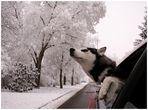 ich bin ein hund! HOLT MICH HIER RAUS!!!