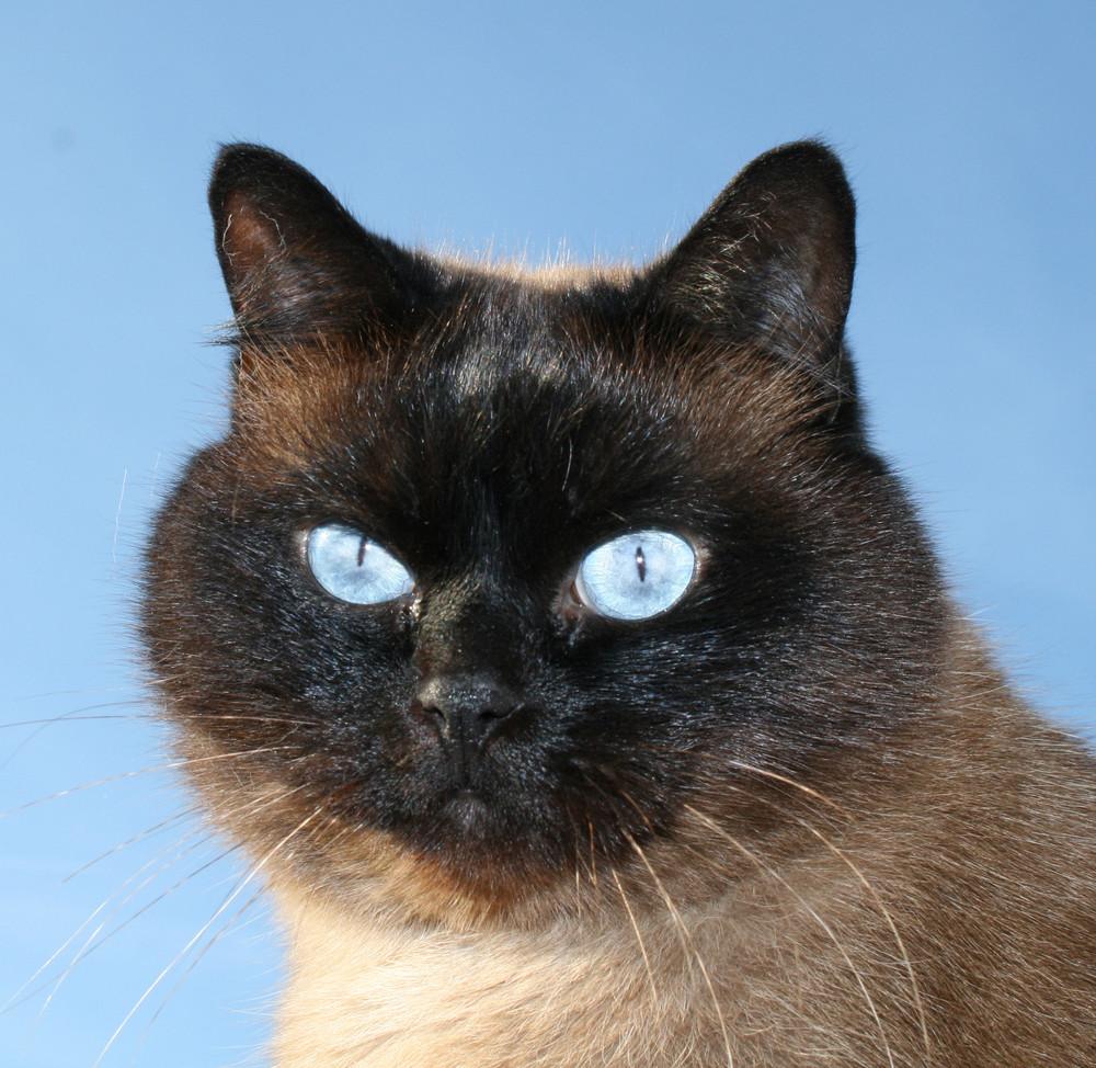 ich bin ein kater keine katze
