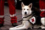 Ich bin ein Rettungshund...