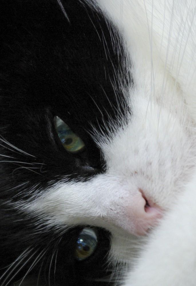 Ich bin ein wildes Tier - Katze Katze Katze Katze - in mir!