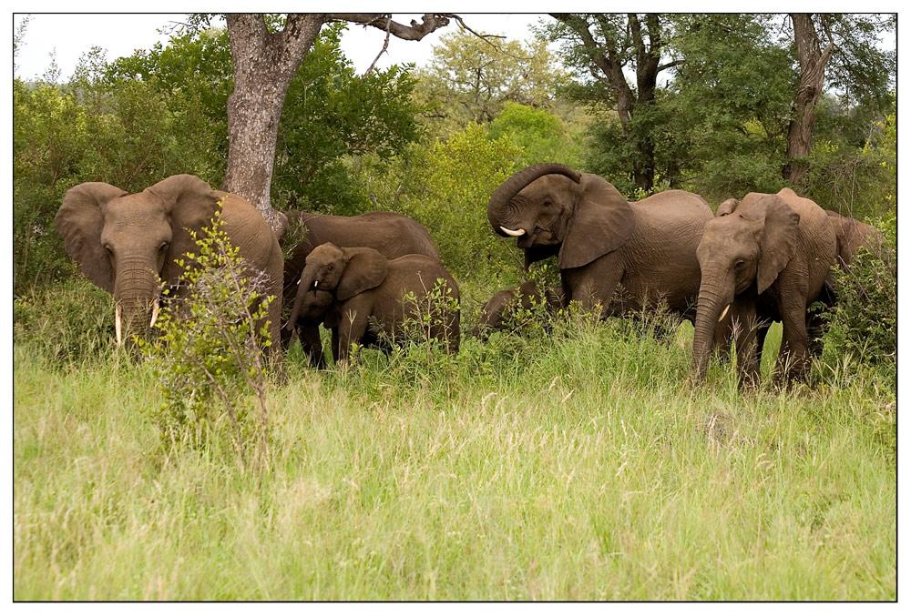 ich bin größer und stärker als du, sagte der Elefant ...