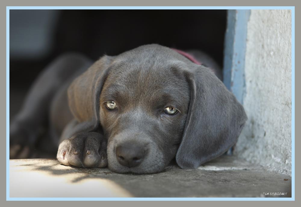 ich bin m de foto bild natur hunde tiere bilder auf fotocommunity. Black Bedroom Furniture Sets. Home Design Ideas