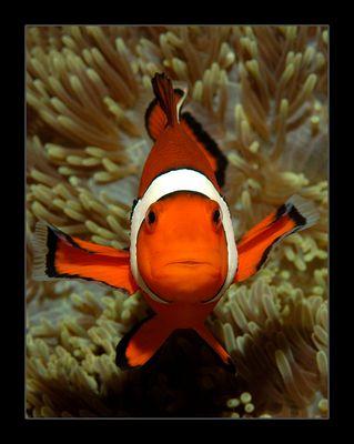 Ich bin NICHT Nemo!