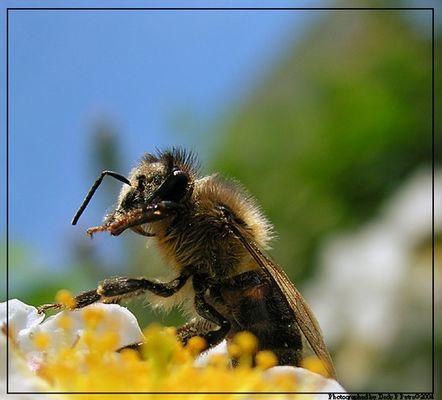 Ich bin nur ein Bienen :)